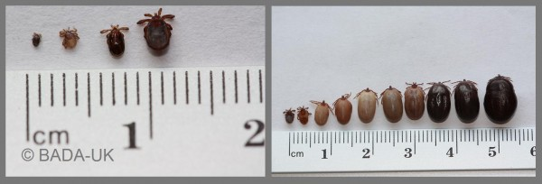 Tick-sizes-against-rule-600x204