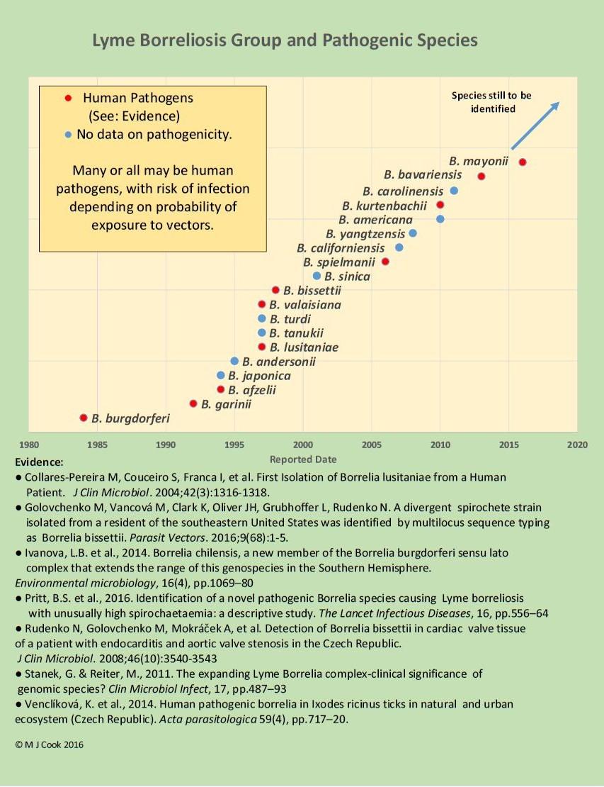 Borrelia pathogen chart jpeg horz